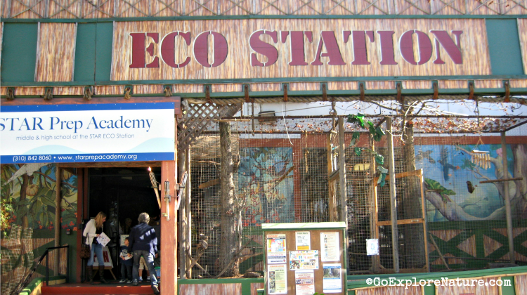 STAR Eco Station is an 18,000-square-foot wildlife rescue center right in the heart of Culver City.