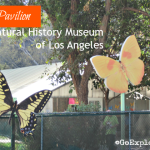 Every spring and summer, the Butterfly Pavilion at the Natural History Museum of Los Angeles plays host to hundreds of live butterflies. Don't miss a visit!