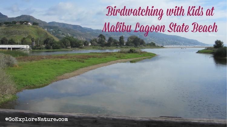 Malibu Lagoon State Beach is a great place for Los Angeles families. Did you know you take guided tours bird watching tours with kids?