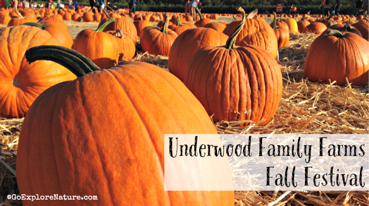 Our tips for navigating your way around Underwood Family Farms' Fall Harvest Festival will ensure a great day trip for kids and parents alike.
