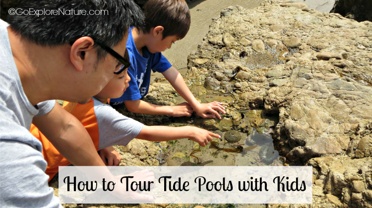 How To Tour Tide Pools With Kids Goexplorenature Com