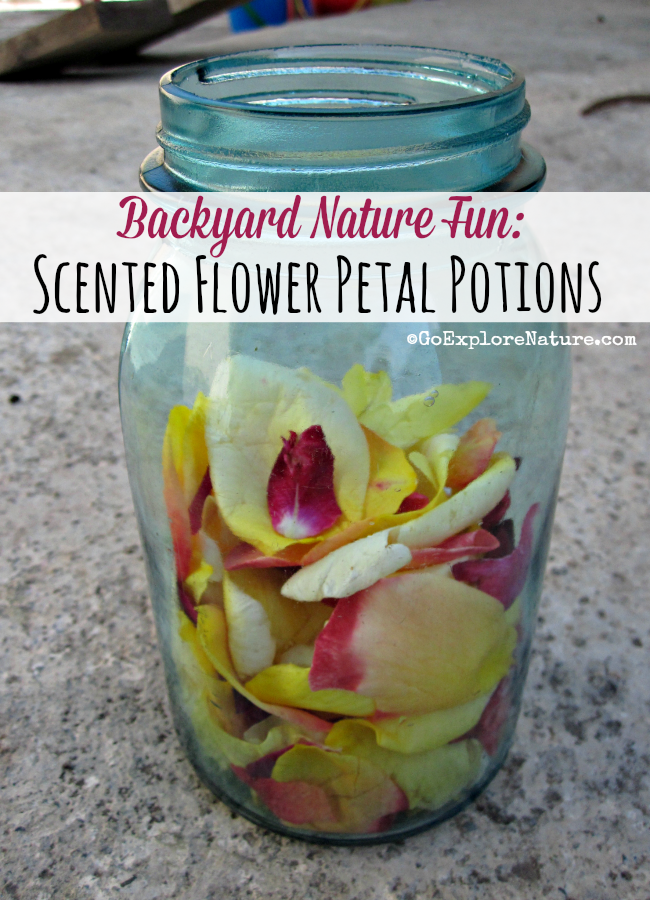 Making scented flower petal potions gives kids a chance to touch, squish, smell and play with flowers. Which magical potion will smell the nicest?