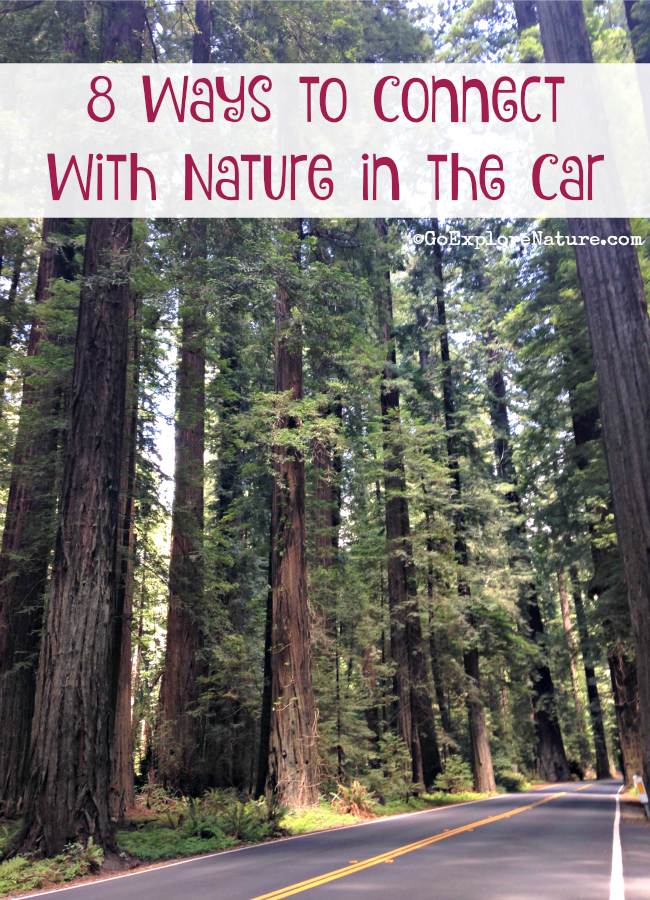 These 8 ways to connect with nature in the car can help you and your family tune into the outdoors on your next family road trip.