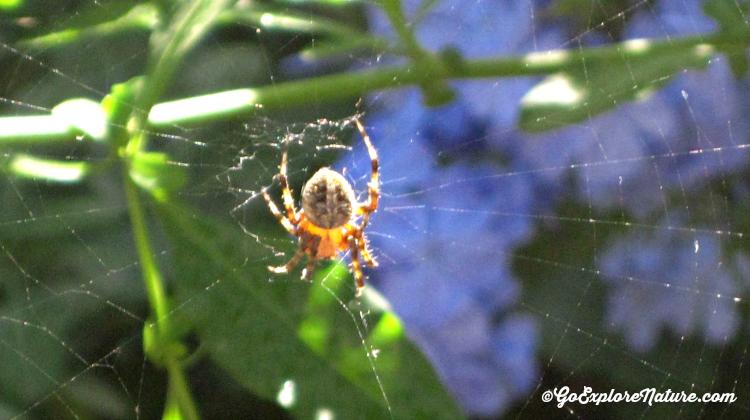 NHMLA Spider Pavilion - Web
