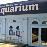 Santa Monica Pier Aquarium - Featured
