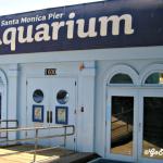 Santa Monica Pier Aquarium - Featured