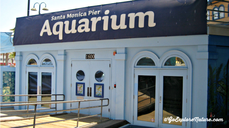 Visit the pint-sized Santa Monica Pier Aquarium for some undersea fun. Then head outside to the Pier or the beach, both just steps away.