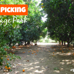 Orange Picking at Heritage Park - Featured