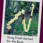String Fresh Garland for the Birds