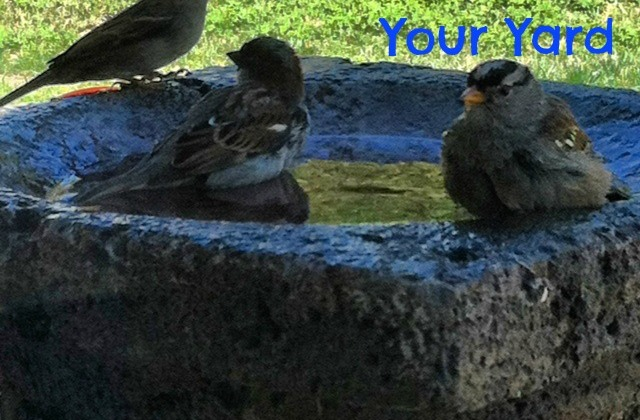 5-Ways-to-Invite-Birds-to-Your-Yard