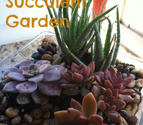 Indoor Succulent Garden Goexplorenature Com