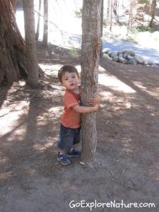 Play among the trees: Hug a tree