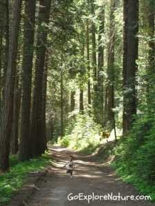 Play among the trees: Run wild