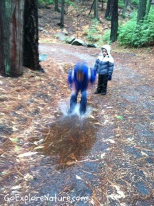 Play among the trees: Splash in puddles