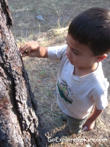 Play among the trees: Become a tree detective