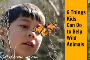 6 things kids can do to help wild animals