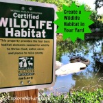 Create a Wildlife Habitat in Your Yard