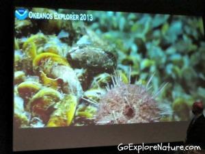 Deep Ocean Exploration At The Aquarium Of The Pacific