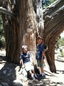 Hiking the Woodland Trail in Big Bear