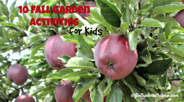 Fall Garden Activities - Featured