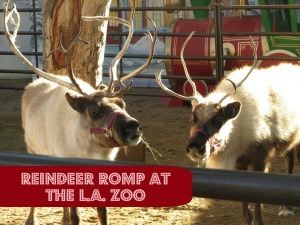 Reindeer Romp at the L.A. Zoo