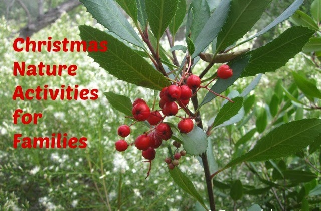 25 christmas nature activities for families