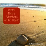 Fun Friday: Winter Nature Adventures at the Beach