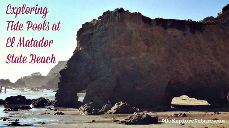 Exploring tide pools at El Matador State Beach is a fun, free outdoor activity for Los Angeles families. Here's how to make your adventure a success.