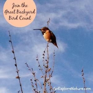 Join the Great Backyard Bird Count