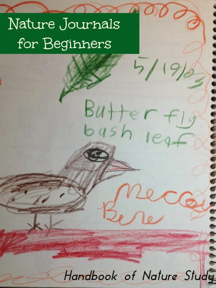 fun friday  nature journals for beginners