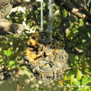 Make a Pinecone Birdfeeder