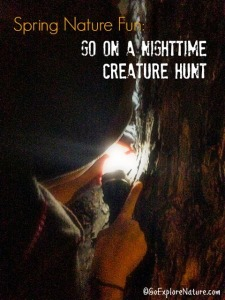 Spring Nature Fun: Go on a Nighttime Creature Hunt
