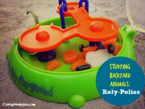 Studying Backyard Animals: Roly-Polies
