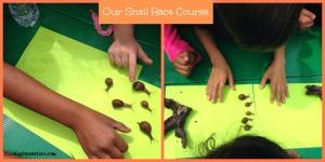 Backyard Nature Game: Snail Races - GoExploreNature com