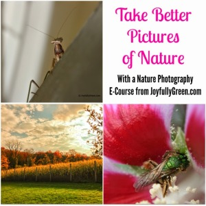 Photography E-Course: Take Better Pictures of Nature