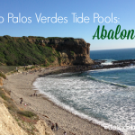 Rancho Palos Verdes Tide Pools: Abalone Cove