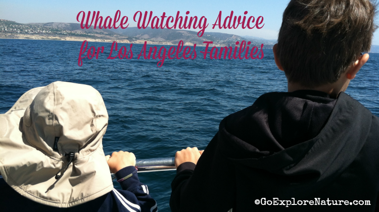 Every Southern California kid should go whale watching! If you're wondering what it might be like, here's some sage whale watching advice for Los Angeles families.