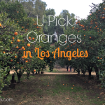 U-Pick Oranges in Los Angeles