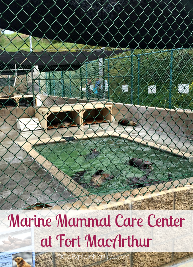 Marine Mammal Care Center - pinnable