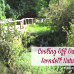 When temperatures start to rise in Los Angeles this summer, try cooling off outside at the Ferndell Nature Museum in Griffith Park.