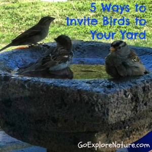 5 ways to invite birds to your yard