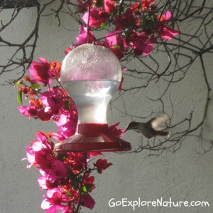 Provide food for birds in your yard