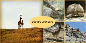 Animals at The Living Desert