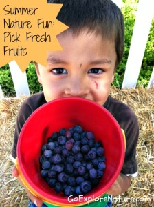 Summer nature fun: Pick fresh fruits