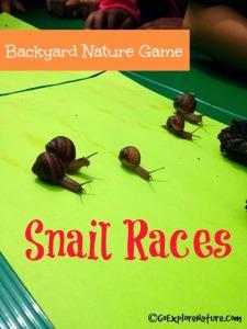 Backyard Nature Game: Snail Races