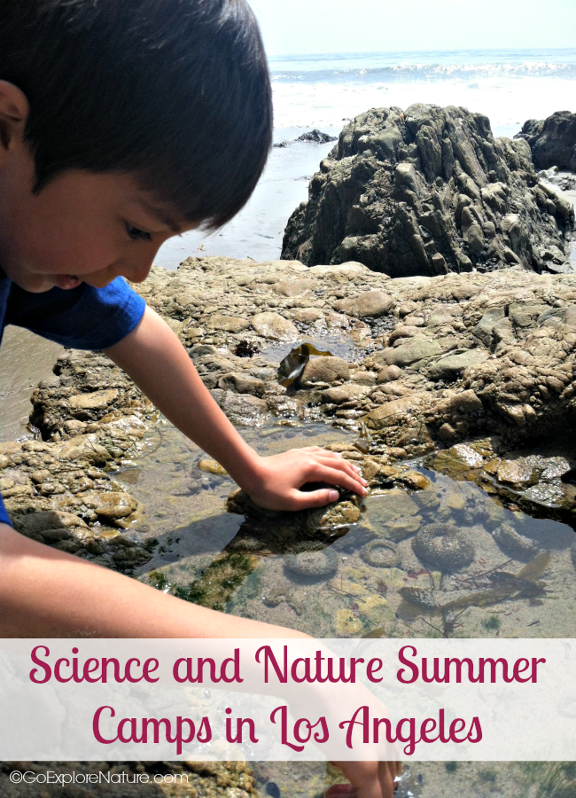 This parent-friendly guide to science and nature summer camps in Los Angeles will help you find the right LA camp for your child.